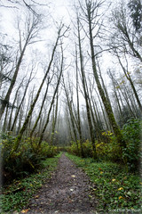 Passages (ScottElliottSmithson) Tags: november autumn trees mist cold tree fall nature wet leaves rain fog forest canon eos washington woods path foliage trail 7d pacificnorthwest washingtonstate issaquah kingcounty cougarmountain eos7d dtwpuck scottsmithson scottelliottsmithson