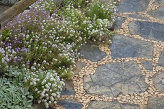 Sucre Museum Garden-  flagstone mosaic and blooming flowers (patriciajcqs) Tags: travel flowers plant detail stone architecture garden design purple low dry ground bolivia ear lambs covers atmospheric alyssum sucre xeriscaping hardscape