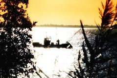 Pêche de la pibale (alevin d'anguille) (romaneau) Tags: port bateau pêche crevette pche anguille gironde estuaire estuairedelagironde portdepeche stdizantdugua pibale saintdizantdugua portconac saintdizanais saintdizanaise stdizanaise philippebizet stdizanais
