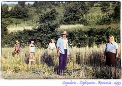 Proyecto 52A: #48/52 Segadores - Romania - 1993 (cresponaon) Tags: verde analog vintage nikon gente amarillo romania sighisoara campo mies rumania analogica hoz diapositiva segadores bistrita cresponaon