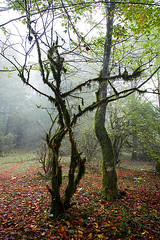 Fall Leaves Under Dancing Tree (shumpei_sano_exp9) Tags: fall iran automn jungle mazandaran