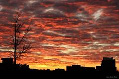 Nubes rojas (jcmejia_acera) Tags: madrid sunset skyline atardecer rojo edificios nubes rbol crepsculo ramas vallecas