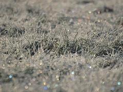 Une étincelle dans le regard (Titole) Tags: light grass frost herbe frosted givre diffraction irisé titole nicolefaton