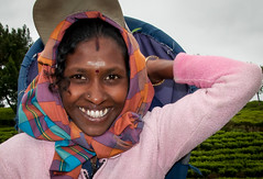 Tea picking (dirk j slotboom) Tags: woman srilanka 2014 slotboom nuwaraeliya centralprovince teapicking dirkslotboom