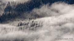 Nebelwald (nilsbuecher) Tags: nebel wald schwarzwald sonnenstrahlen
