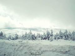 Love winter. (***SuSana***) Tags: winter paisajes snow nieve invierno frio abetos susanadelcampofotografía