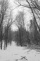 Covered In White (SerpaDesign) Tags: trees winter white snow cold nature woods trail covered frigid tannerserpa serpadesign