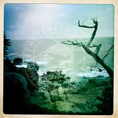 CALIFORNIA-365