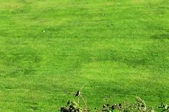 euro-trip (lu_dgm) Tags: madrid trip santiago espaa verde art portugal birds canon mar photo corua espanha europa europe natureza frias toledo porto compostela eurotrip 1855 fotografia gaia vacations pssaros lugo vacaciones vigo pacfico oceano coruna mochilo lacorua photografy 55250 acaruna