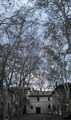 Pratica di Mare (JackTorva) Tags: blue trees sky italy white verde green nature foglie alberi clouds canon eos rebel italia nuvole mare blu ngc natura cielo di eucalyptus autunno bianco borgo lazio 14mm pratica samyang xti 400d grandangolare eucalipti