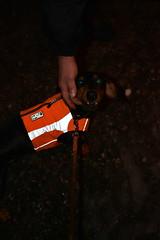 _150101_4110 (verbeek_dennis) Tags: finland fireworks newyear dachshund tax kaapo dashond myrkoira  gravhund jazvek nikond800e tksa