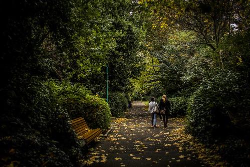 Paseos entre hojas