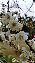 20150118_155548 (5a) Tags: taiwan taichung plumflower  taiwantrip