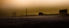 In The Haze (jeanmarie shelton) Tags: morning sky horse sunlight mist nature field animal fog architecture sunrise fence dark outdoors haze nikon pasture serene jeanmarie hff jeanmarieshelton