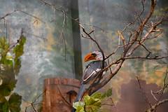 Zoo life sucks (Pics4life.nl) Tags: holland bird zoo nederland nl vogel rhenen dierentuin dierenpark ouwehand