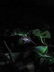 "Santa Elena: les étangs à grenouilles by night <a style=""margin-left:10px; font-size:0.8em;"" href=""http://www.flickr.com/photos/127723101@N04/26963011686/"" target=""_blank"">@flickr</a>"