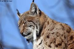 IMG_9020 (u.wittwer) Tags: park zoo schweiz switzerland tiere suisse tierpark heimat arth naturpark goldau widi