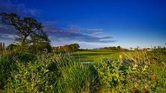 Serene (TanzPanorama) Tags: england nature rural countryside kent sony bucolic fe1635 fe1635mmf4zaoss sonya7ii ilce7m2 tanzpanorama
