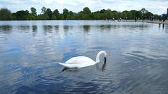 P5162041 () Tags: park england london hyde