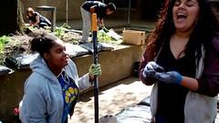 Laughs (Western Cuyahoga Audubon) Tags: youth conservation habitat beautification mentoring volunteerism environmentalconservation birdfriendly schoolprograms collaborativeleadership clevelandmunicipalschools waltonschool westerncuyahogaaudubon