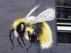 bee in the window (PDKImages) Tags: flowers windows streetart beauty face daisies contrast manchester graffiti eyes kiss colours murals stunning daisy gods walls artinthecity manchesterstreetgallery murallife