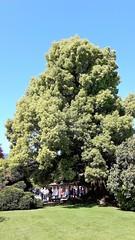 isole borromee (34) (giangian239) Tags: lago acqua blu giardino maggiore albero verde prato statua monumento isola isole borromee madre bella superiore panorama paesaggio lungolago