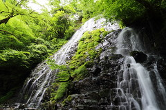 Waterfall (Teruhide Tomori) Tags: green nature water japan landscape waterfall  fukui