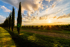Sunset in Italy (Martin Zurek) Tags: italien sunset sky food color nature clouds zeiss landscape vineyard wine it montalcino toscana ze distagon 5ds distagont815 canon5dsr 5dsr