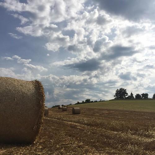 Harvesting time.
