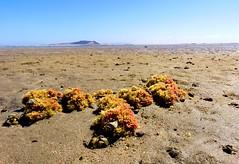 IMG_0219a (Tina A Thompson) Tags: sonora seashells mexico sealife seashell marinebiology tidepools seaofcortez marinelife chollabay mexicobeaches chollabaymexico