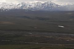 DSC_0770 (David.Sankey) Tags: alaska alaskarange mountains mountainrange denali denalinationalpark hiking nature park nationalparkdenalinationalparkandpreserve mckinley travel fog rivers savageriver savagealpinetrail trial savagealpine
