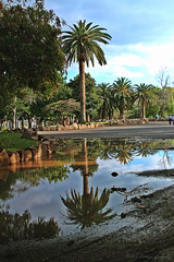 IMG_9991 (2) (nelson_tamayo59) Tags: parque agua canarias cielo area tenerife palmera recreo