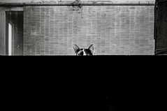 An eyecontact with a heart of mum's cat: somewhere rooftop on the streets. (SUNA_PHOTOGRAPHY) Tags: blackandwhite bw monochrome animals cat nikon eyecontact streetphotography mummy discovery protection