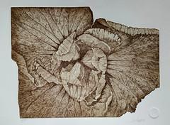 Einblick (art.vestifex) Tags: flower nature etching blte schneider radierung realismus aquatinta vestifex