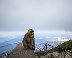 Gibraltarian monkey (larsditlevpedersen) Tags: monkey gibraltar view city wild overview outpost tourism