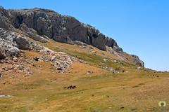 Le plateau d'Aswel (1700m) (Ath Salem) Tags: algrie tiziouzou at boumahdi tikjda bouira montagne djurdjura main du juif thaletat altitude moutain promenade tourisme dcouverte fort route vertige             stade kabylie