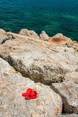 Hibiscus flower by the sea (hapePHOTOGRAPHIX) Tags: 724esp andratx balearicislands balearischeinseln espaa europa europe gelaende islasbaleares landschaft landschaftsform mallorca meer portdandratx spain spanien topographie landscape mar sea terrain topography illesbalears es nikond750