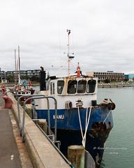 IMG_4717. Napier Manu fishing boat (roseyposey2009) Tags: napier west quay marina perfume point murals napierahuririboats
