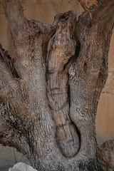 DSC_0877 (Sciabby) Tags: sicily sicilia sciacca filippobentivegna facce faces stone pietra castelloincantato artbrut