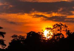 Posta sol (faltimiras) Tags: camerun cameroun rca republica centre africana pigmeu pigmeo bayaka bayaca elefant selva jungle forest elefante elephant gorila africa