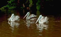 Friends (Rajavelu1) Tags: birdsanctuary birds jurongbirdspark singapore water art aroundtheworld artland creative canon6d travel toor