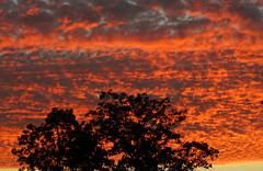 Matin flamboyant (patrick.tafani) Tags: sky sunrise levdesoleil arbre tree matin morning flamboyant
