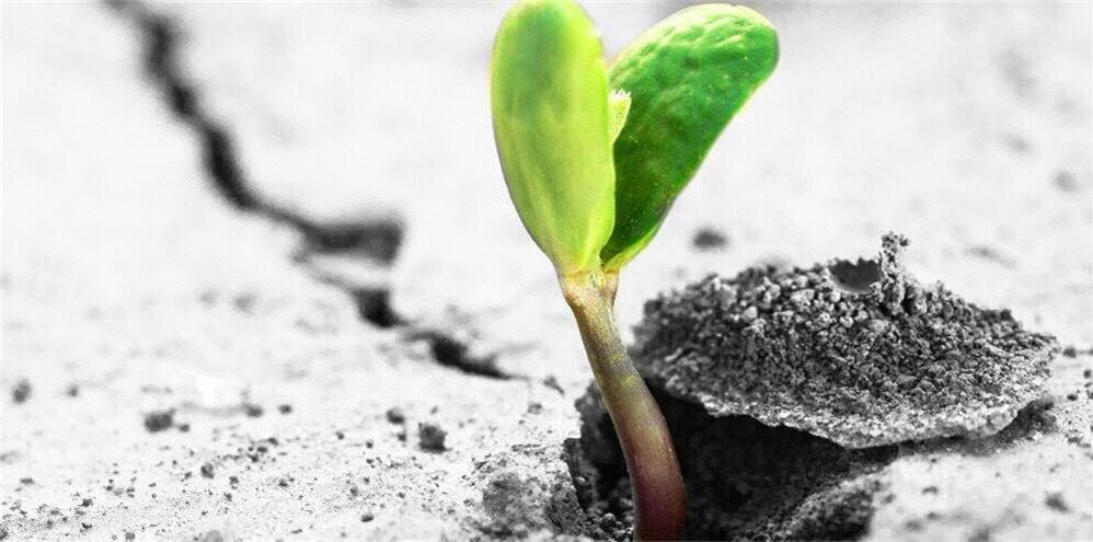 成就你的,可能正是你的弱點