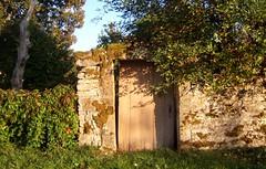 De fines ombres (MAPNANCY) Tags: porte ombre feuillage ciel mur automne soir lumire