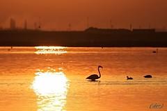 ___ si fa sera! ___ (erman_53fotoclik) Tags: sera fauna fenicotteri riflesso tramonto profili neri uccelli acqua rossa luce canon eos 500d eran53fotoclik destro cattura atmosfera serale controluce