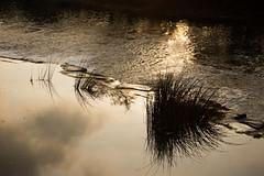 Dark Reflections (FIDDYONE) Tags: autumn sky water reflections river dark weeds bath shadows pools avon weir