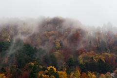 L'automne qui s'en va (MarKus Fotos) Tags: france automne landscape arbre brouillard hautesavoie thonon chablais