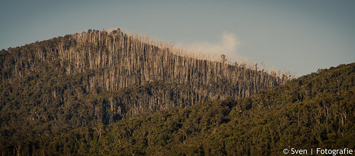 A reminder of bushfire