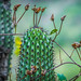 2014 - Copper Canyon -Batopilas - One Cacti