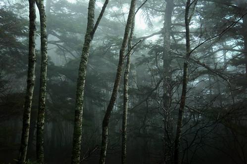 North Yatsugatake mountains / Nagano Prefecture